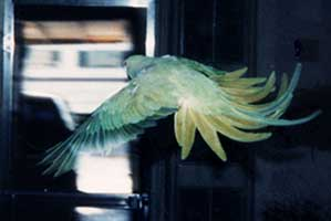 Scan: upper side of the Bird in flight