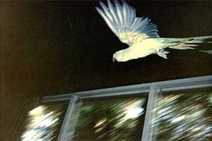 Scan: underside of the Bird in flight