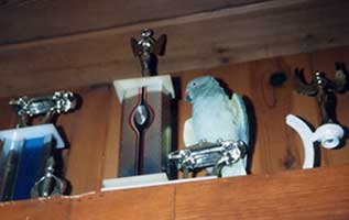 Scan: Bird perched on a pallid bust of a Corvette trophy