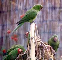 Photo: The conures settle in